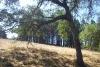 Edge of Forest.jpg